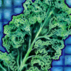 Picture - Curly Kale - Recipes